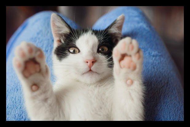 como acariciar un gato